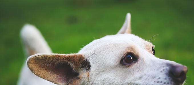 kaboompics.com_White-dog-with-stick